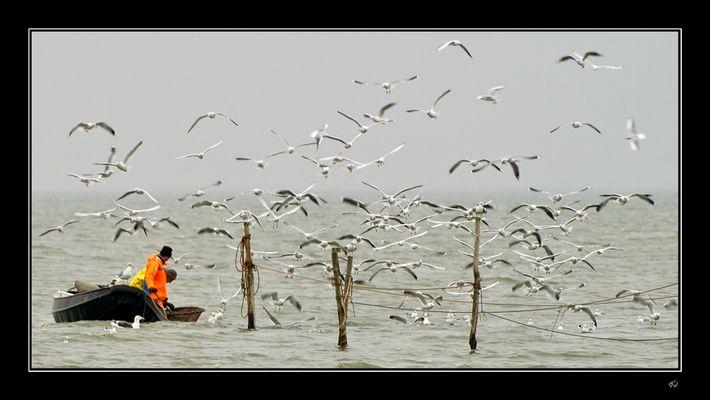 Boys & gulls