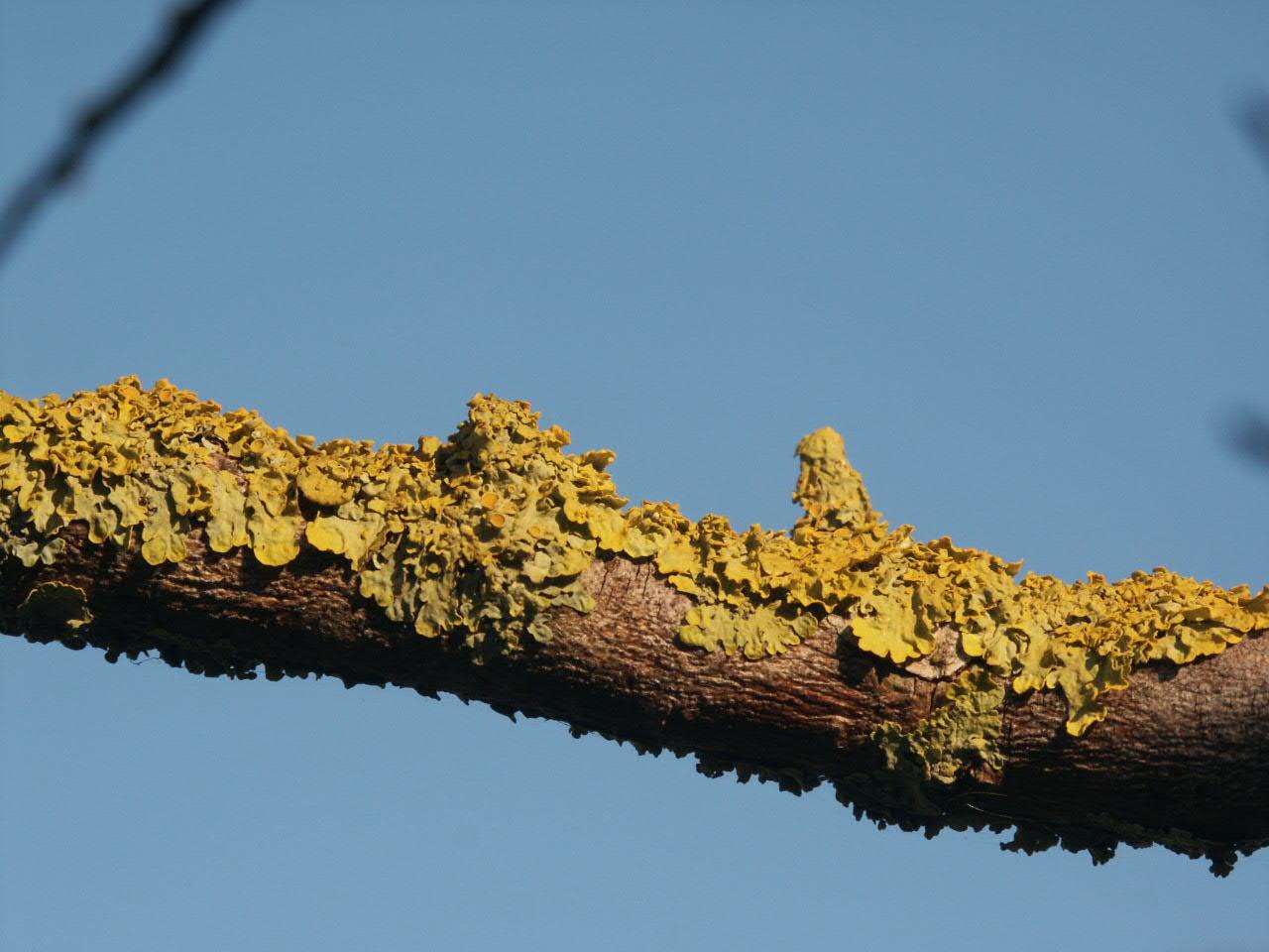 branche d automne....