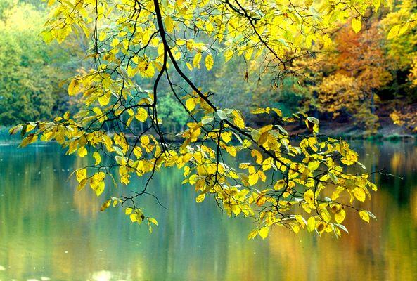 Branche d'automne