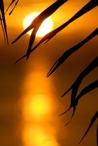 branche de palmier au couché de soleil
