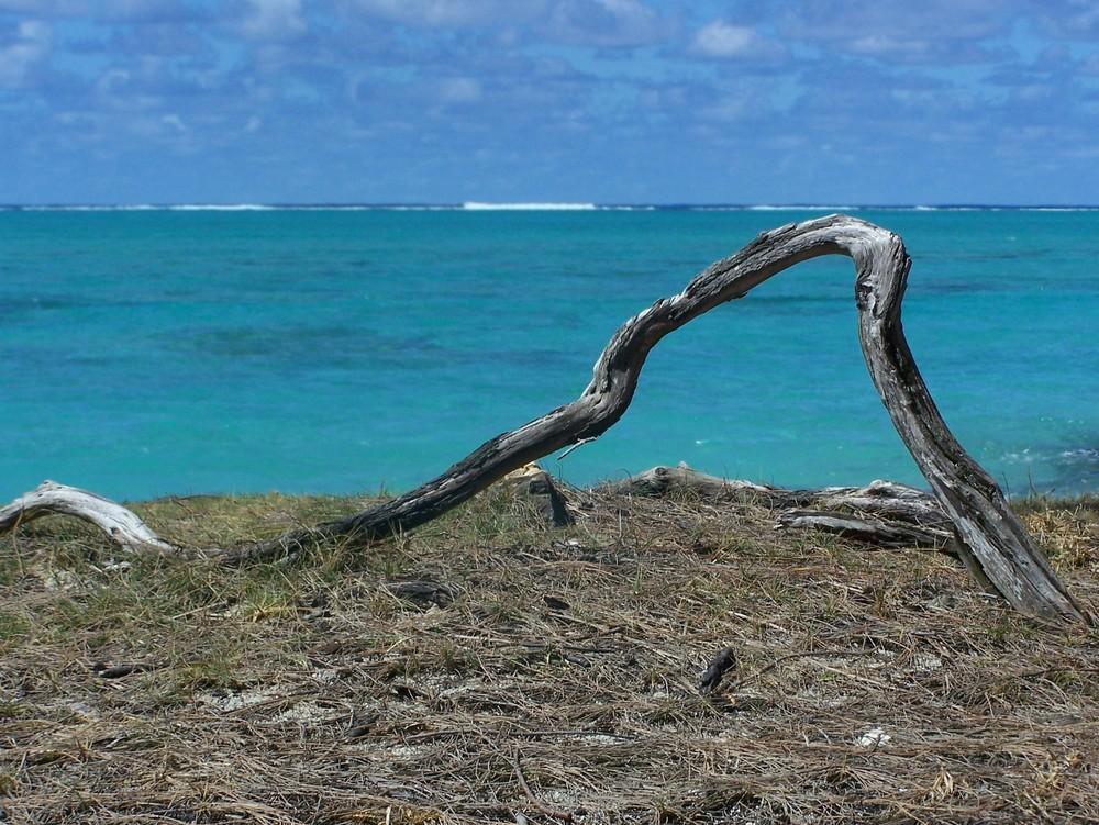 Branche morte sur l'Ile aux Cerfs