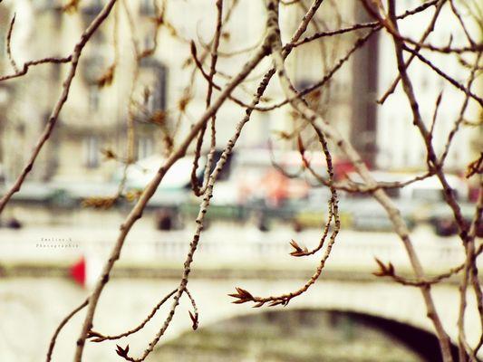 Branches dénudées