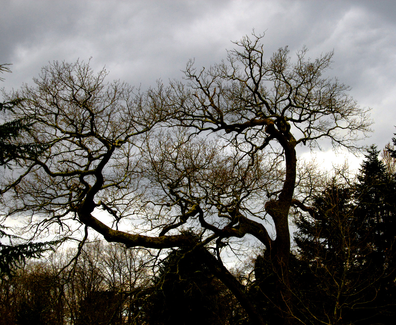 Branches griffues