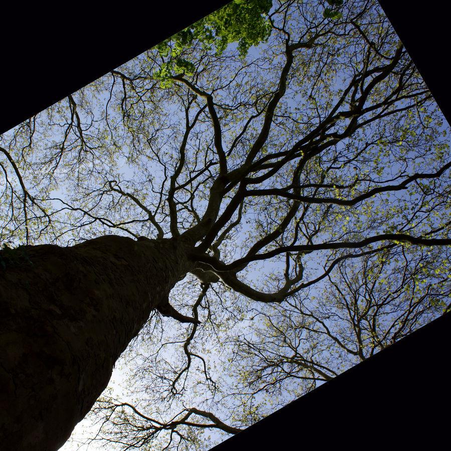 Branches ou racines??