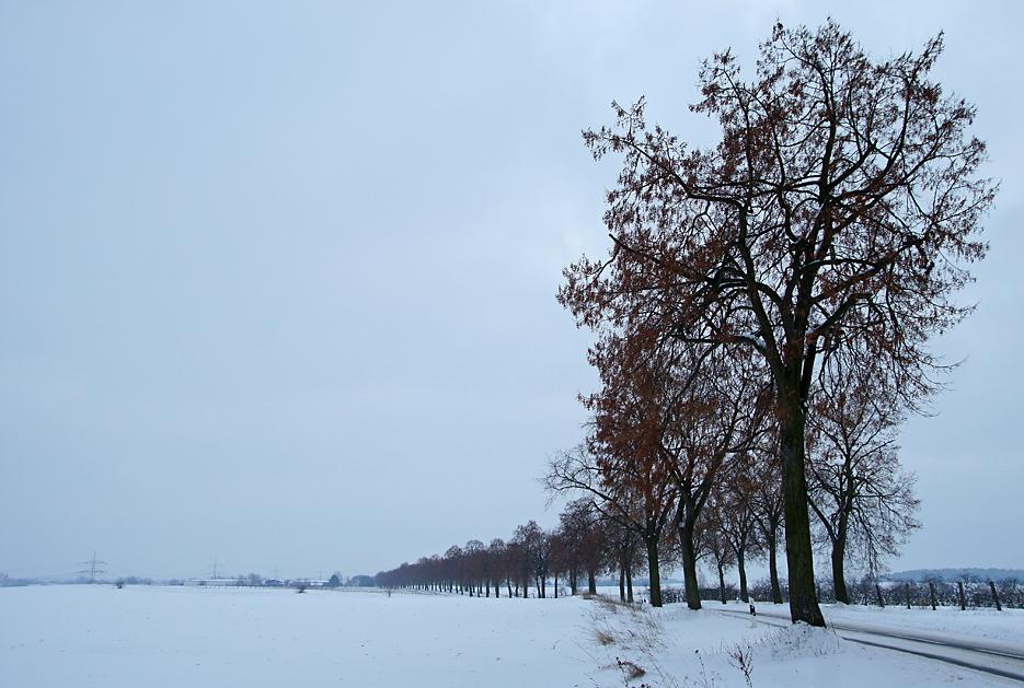 Brandenburg, 26.12.10 – 04