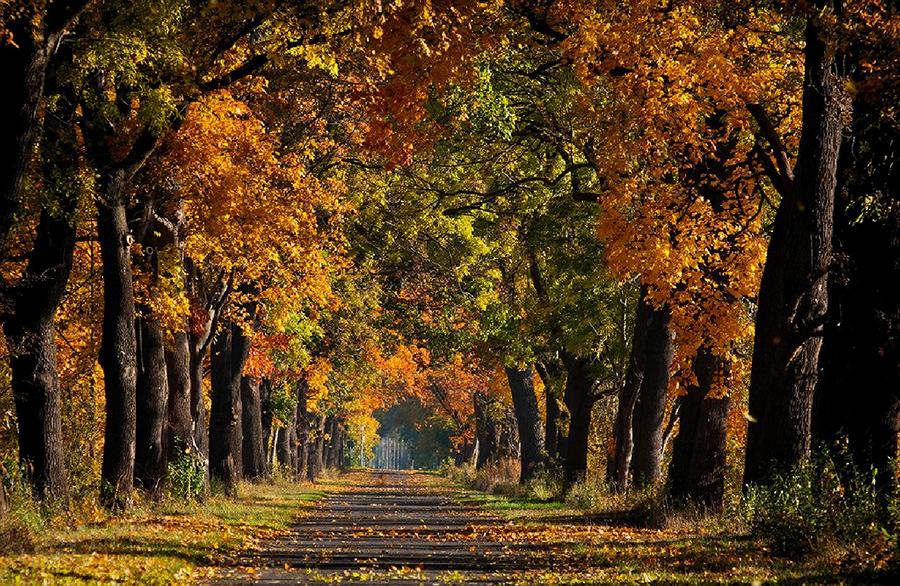 Brandenburger Herbstallee