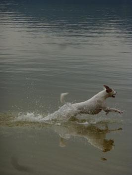 Brasilianischer Seehund ?