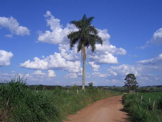 Brasilianischer Spaziergang