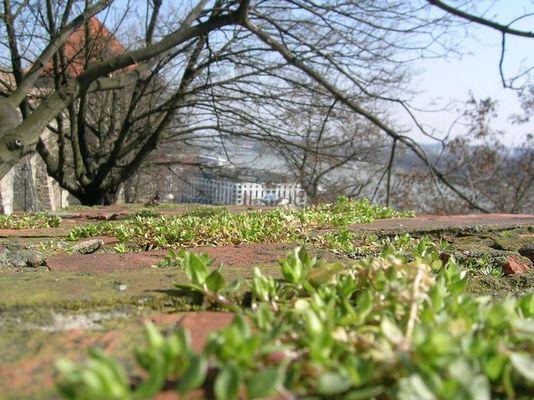 bratislavaburgmauer_beim raufgehen