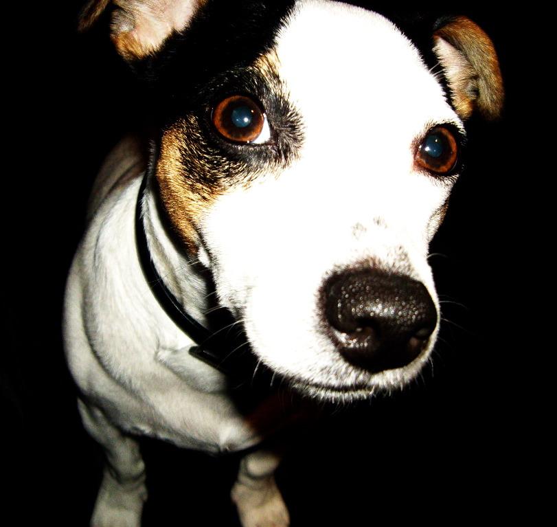 Braver Hund =)
