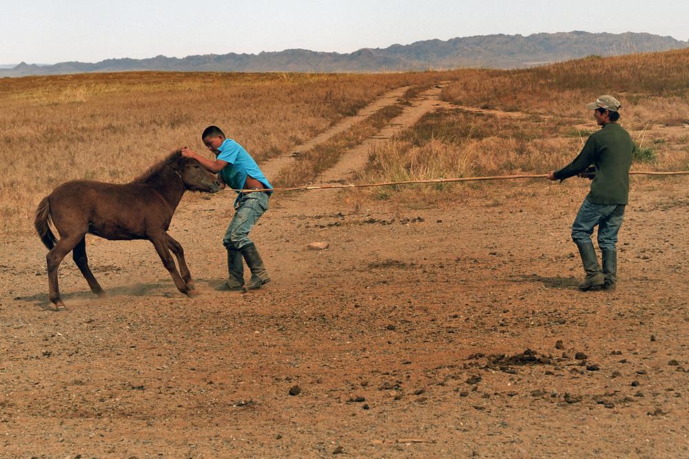 Break in a horse