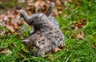 Breakdancing Kitten