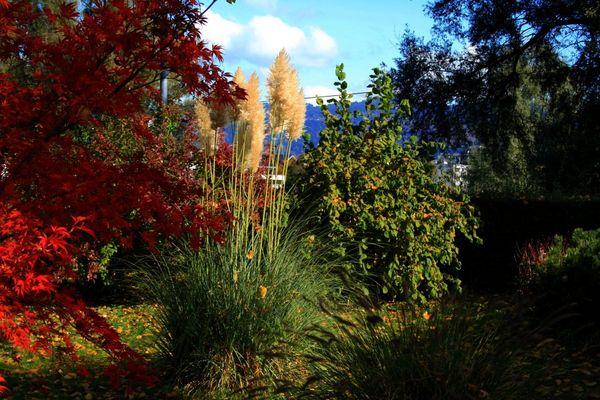 Bregenzer Herbst - Garten