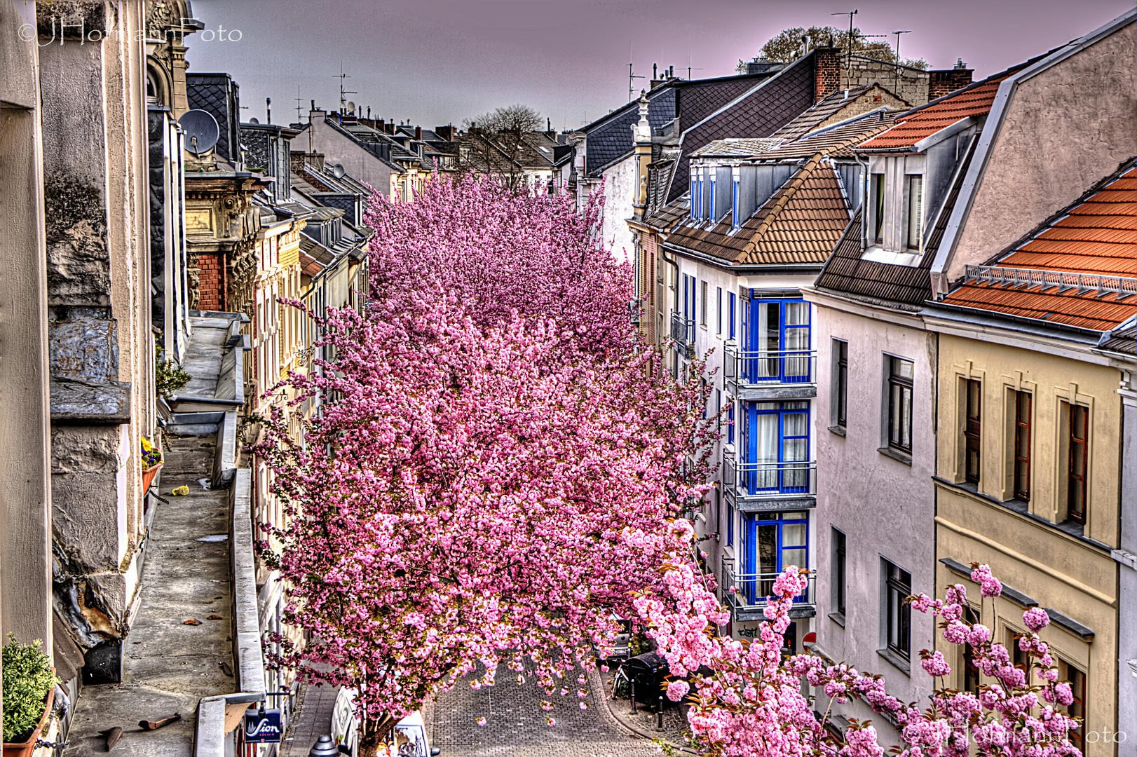 Breite Straße im Frühling