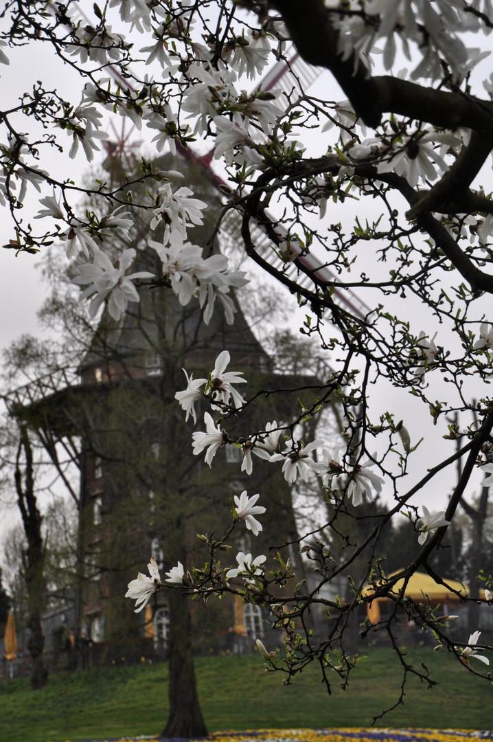 Bremer Mühle im Frühling