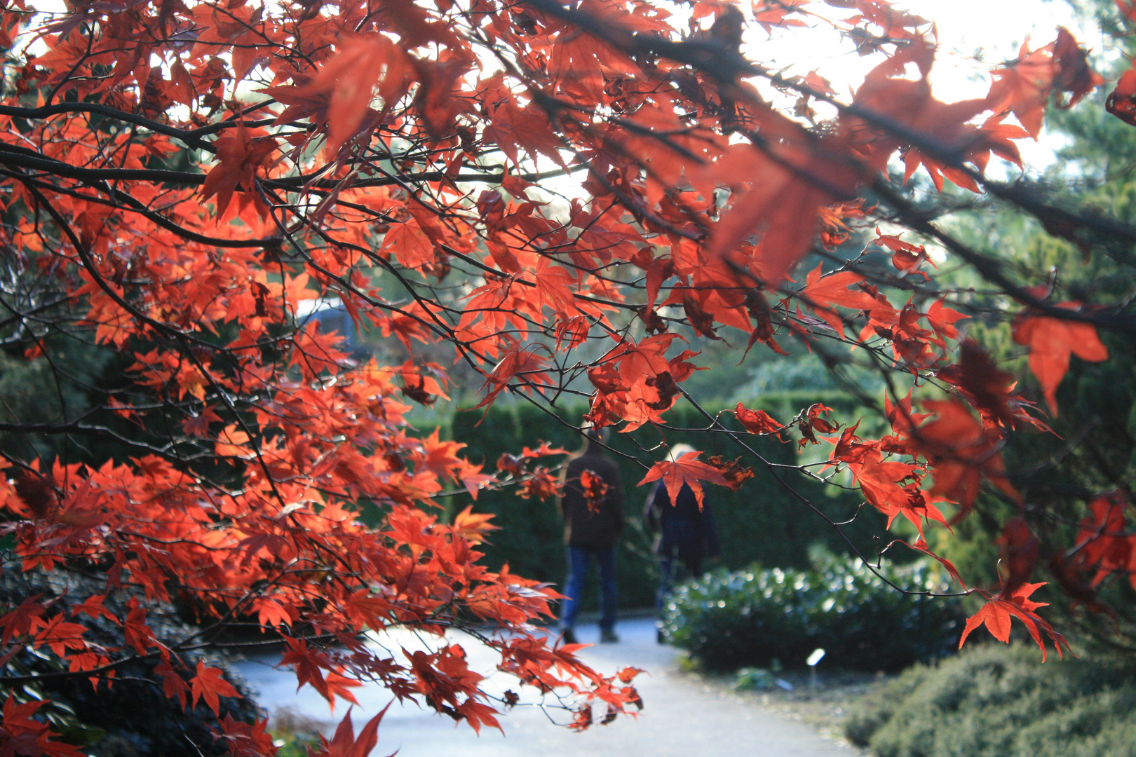 brennende Blätter