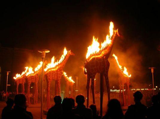 Brennende Giraffen