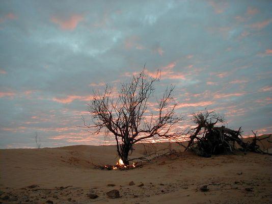Brennender Baum