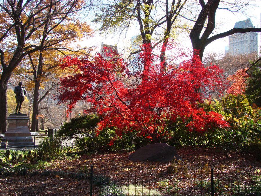Brennender Busch im Central Park
