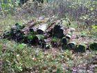 Brennholz im Kreislauf der Natur