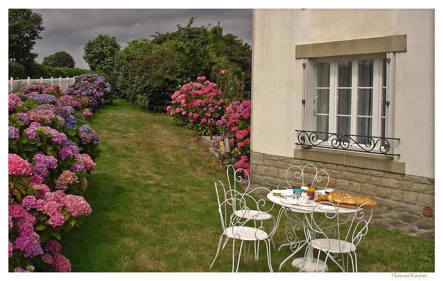 bretonische Hortensien