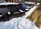 Brière sous la neige