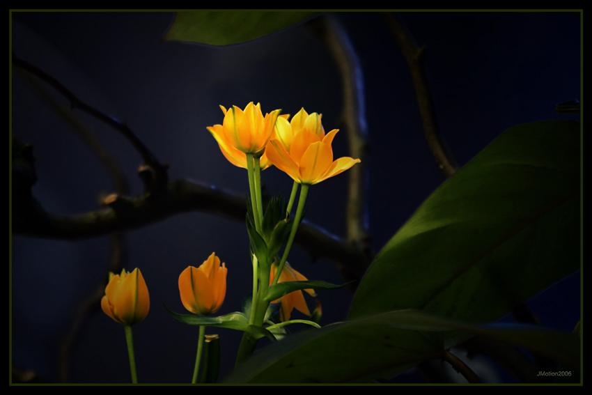 Bright 'n' yellow