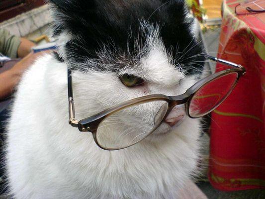 Brille viel Mann!