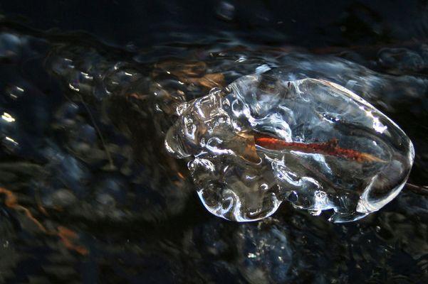 Brindille prise dans la glace