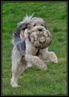 Bring den Ball!