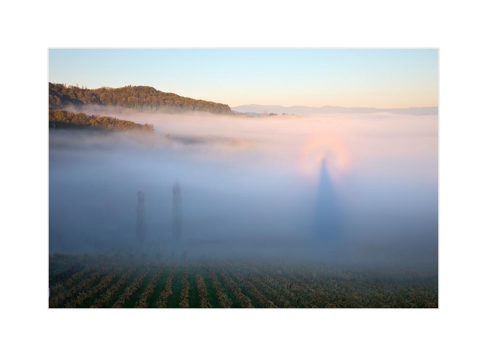 Brockengespenst mit Glorie kurz nach Sonnenaufgang in den südsteirischen Weinbergen