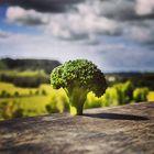 Broco-Tree