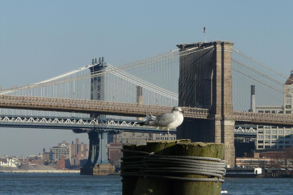 Brooklyn Bridge vom Pier 17 aufgenommen