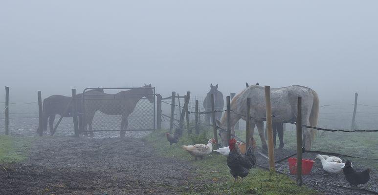 Brouillard à la ferme....