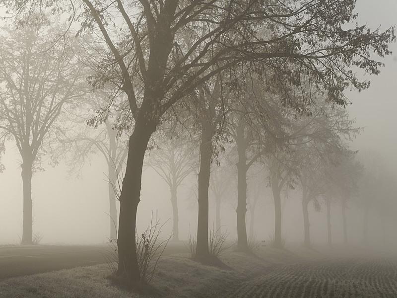 Brouillard d'hiver sur la route entre Ittenheim et Achenheim (Bas-Rhin)