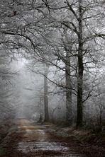 """ Brouillard givrant """