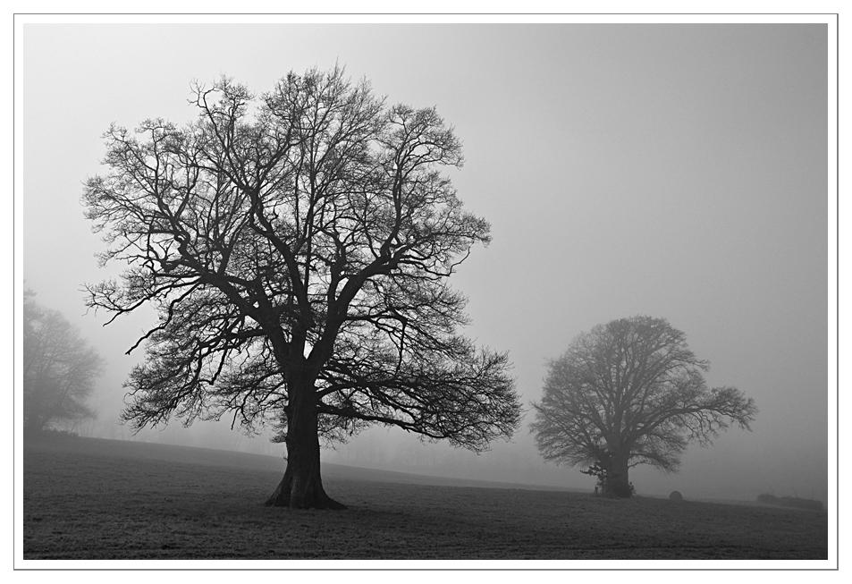 brouillard (I)