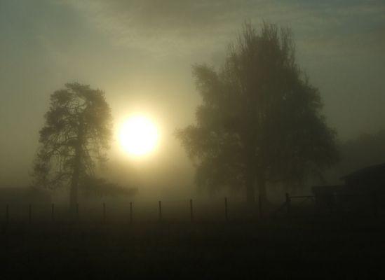 Brouillard Matinal .