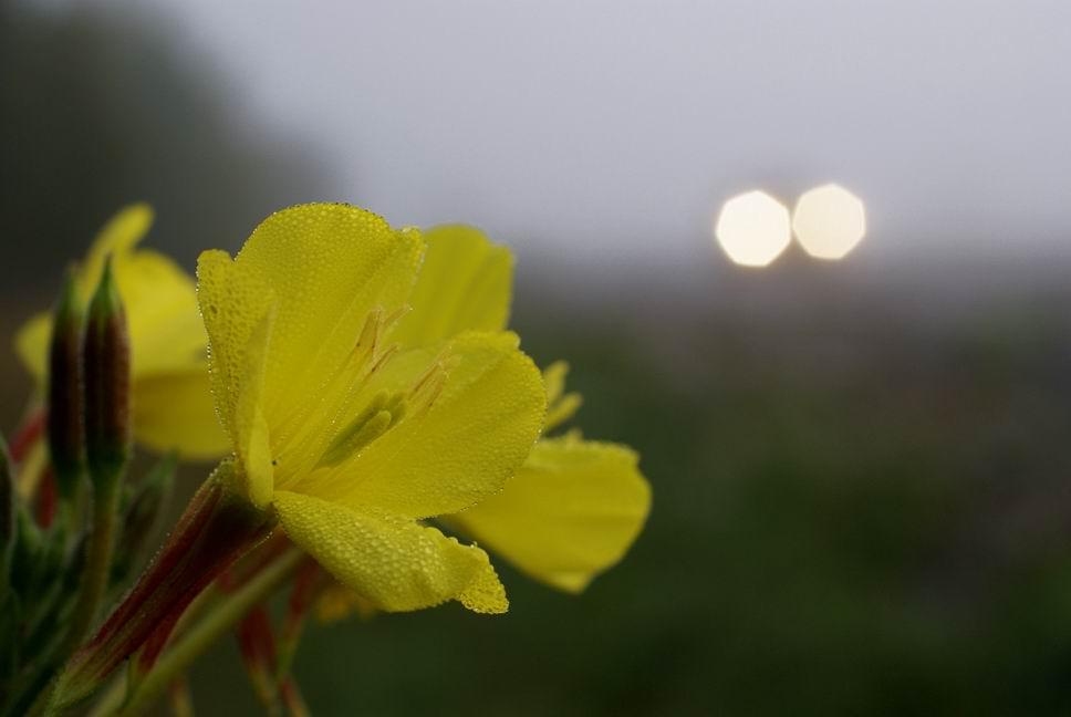 brouillard matinal le long d'une route