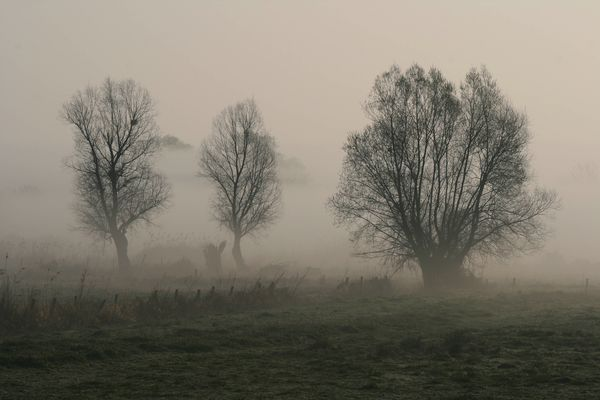 brouillard sur le bocage normand