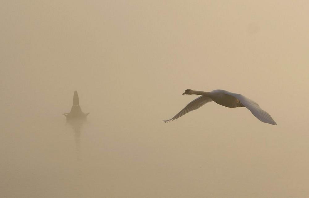 brouillard sur le Rhin