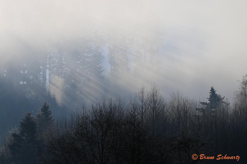 brouillardise