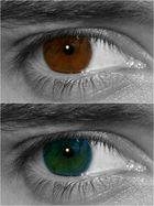 brown or blue?