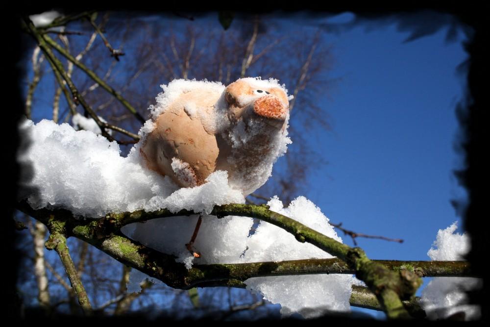 brrrrr Meta - iss das aber kalt hier auf`n Baum