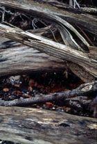 Bruchholz an der Steilküste Dänischer Wohld