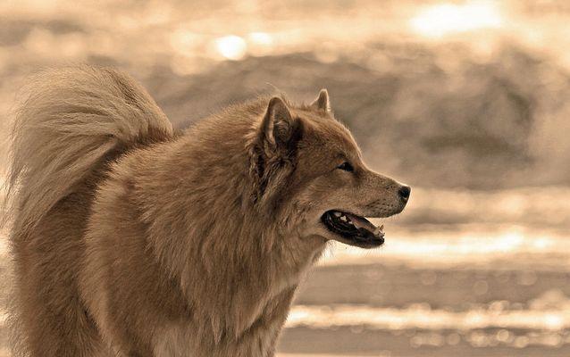 *Bruder Wolf*