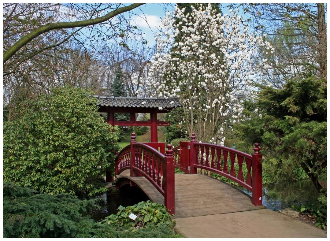 Brücke im japanischen Garten der BAYER AG in Leverkusen