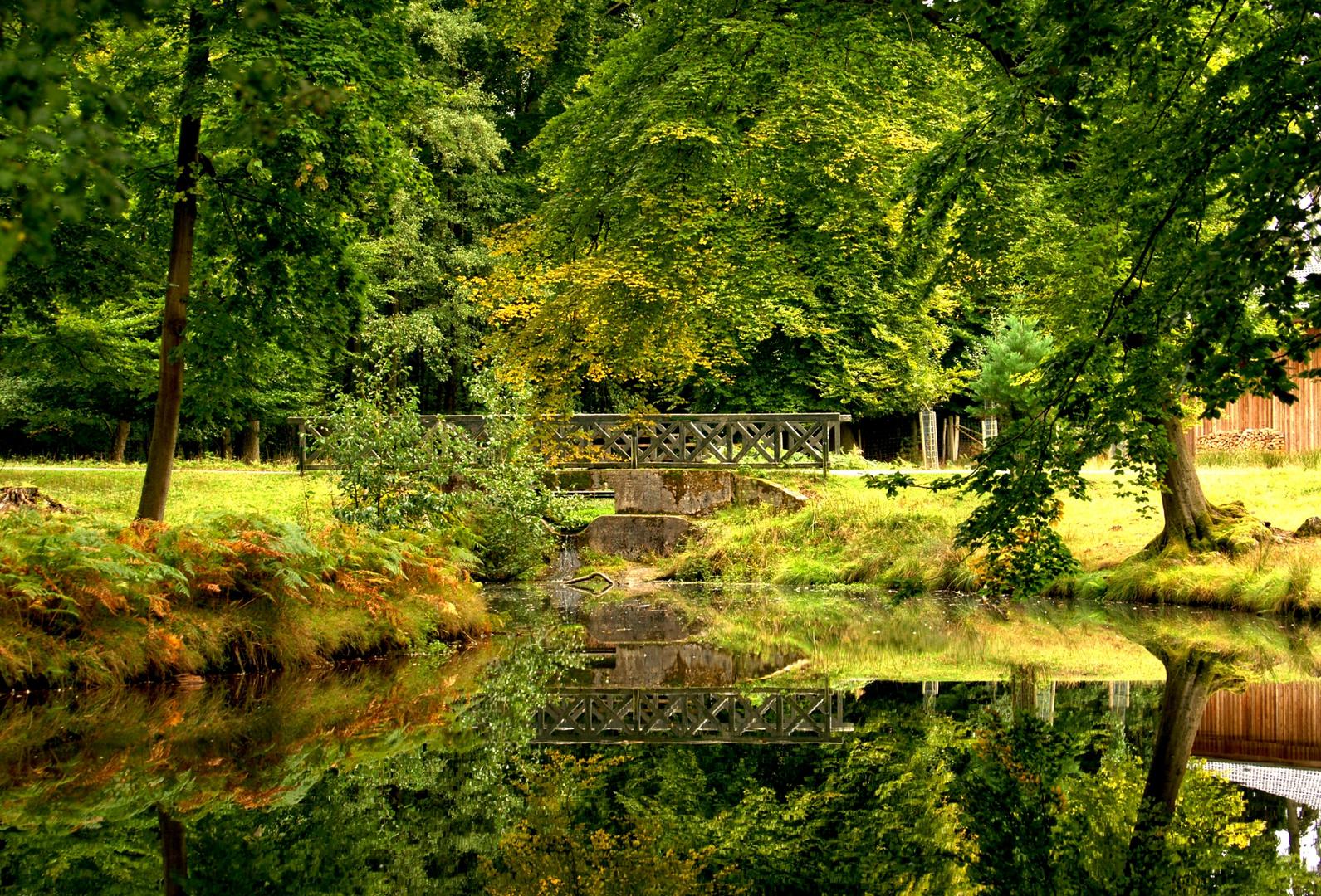 Brücke im Wildpark...