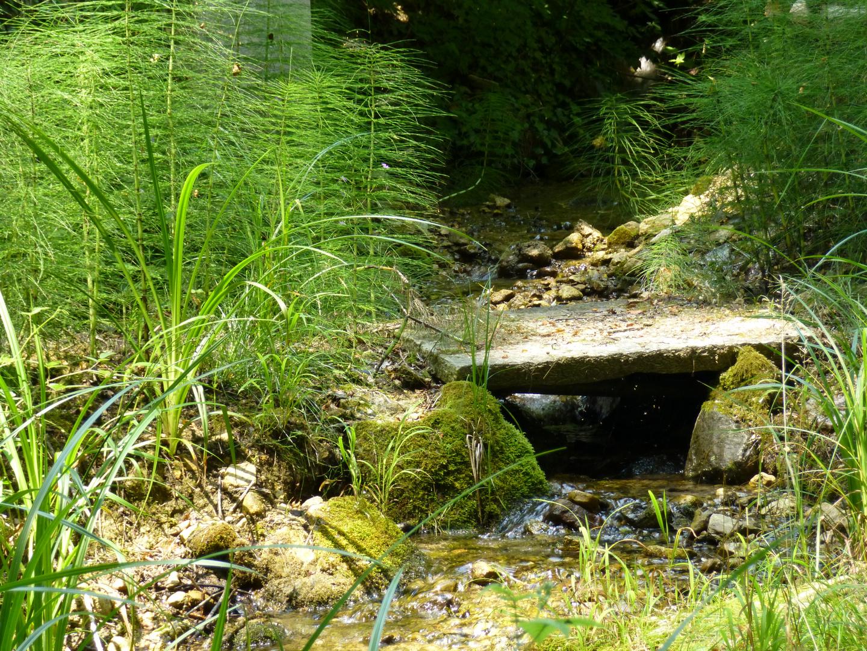 Brücke ins Grüne