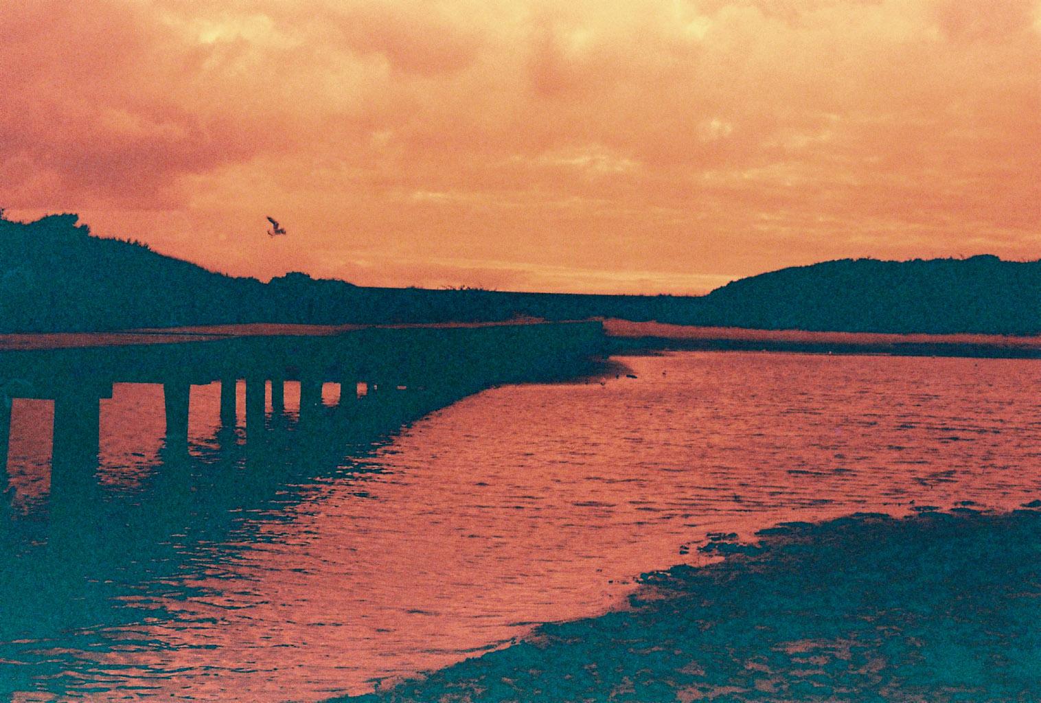 Brücke mit Vogel
